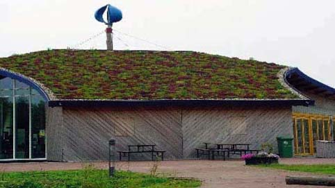 commercial sedum roof