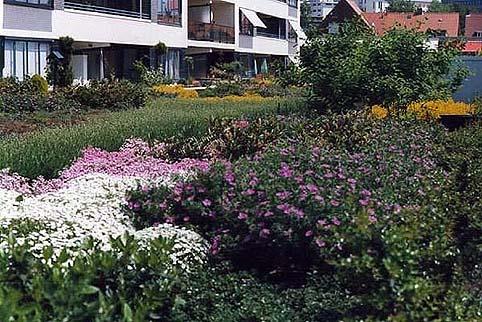 semi_intensive_green_roof