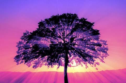 purple sunset tree